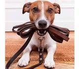 Paseador de Perros; --Dog walker: --Any Time
