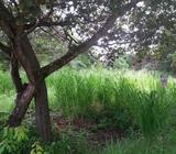 Esplendido terreno en venta en Coronado Panama AZS - wasi_1029414