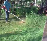 Limpieza de Patio Y Jardineria