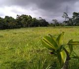 Macano 10 hectareas