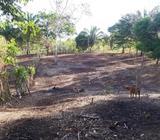 Vendo finca en Arraiján / 4 hectáreas